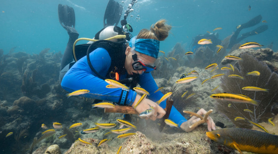 Reef Rescue Program Inset